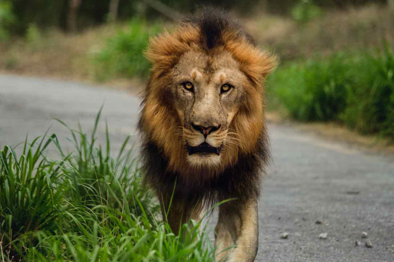 seasonal affective disorder sad lion