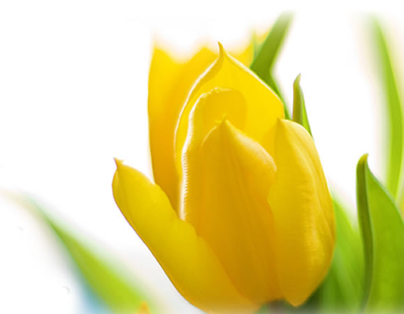 springspecialflower.jpg