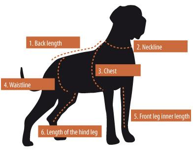 measuringdog.jpg