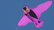 Owl Kite - Joel Scholz