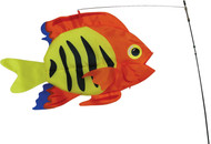 Swimming Fish - Flame Fish