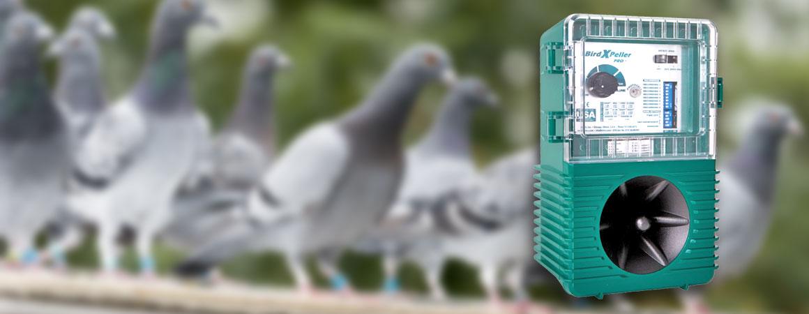 Birds Off - Australia's Leading Bird Control Specialists