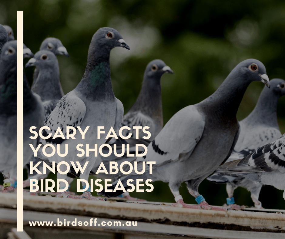 scary-fact-about-birds.png