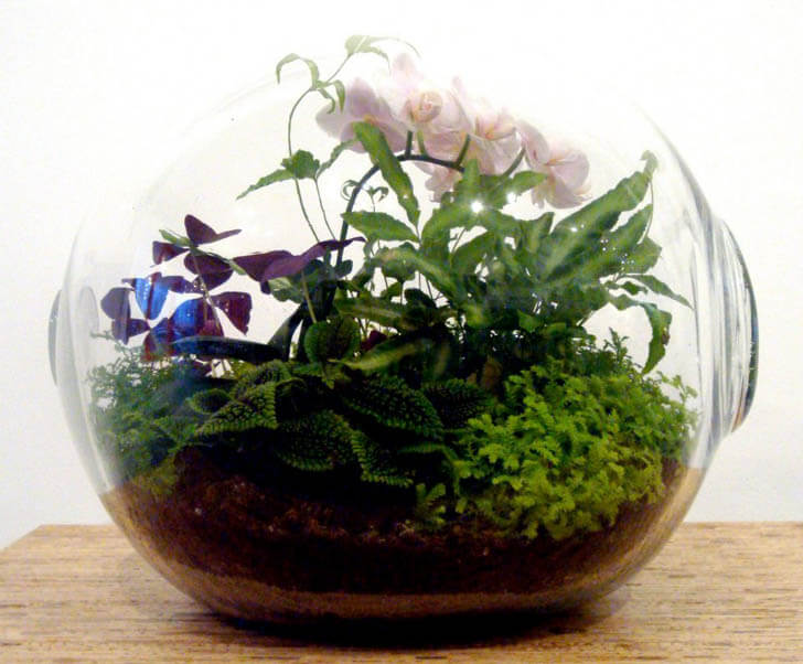 crooked-nest-terrariums5.jpg