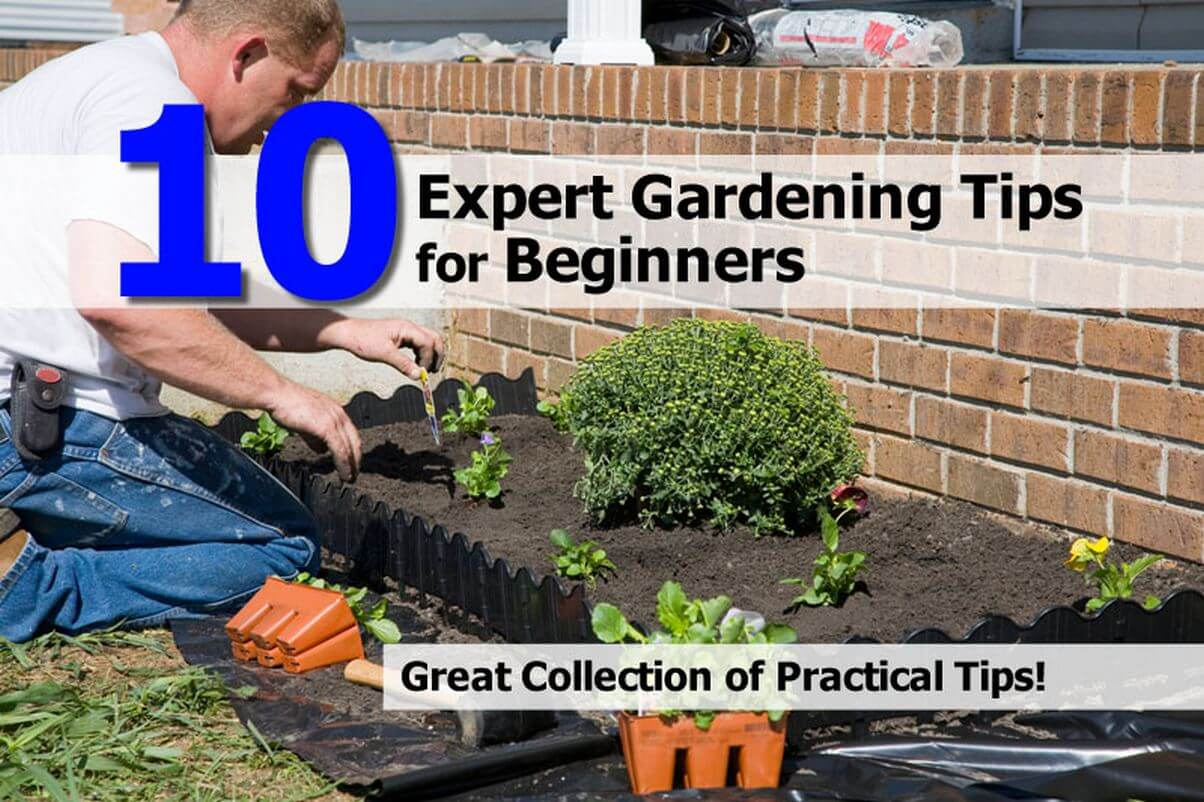 expert-gardening-tips-for-beginners.jpg