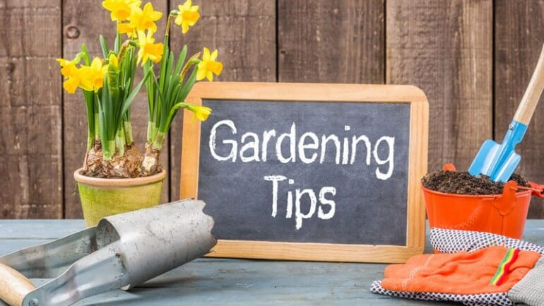 gardening-tips-for-beginners-770x433.jpg