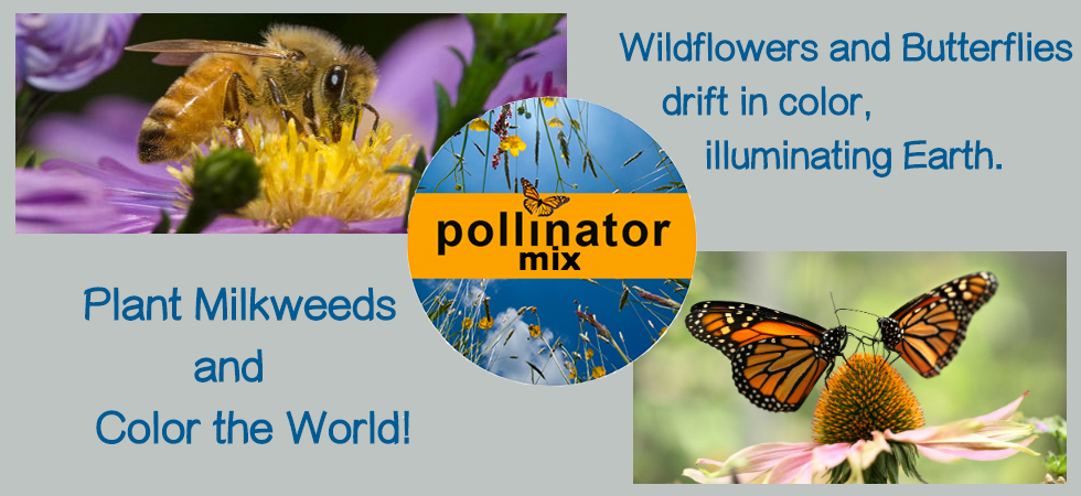 Our Best Pollinator Mix brings honey bees and butterflies!
