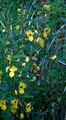 IA CRP NATIVE SEED MIX | Iowa Standard Forb Mix - Statewide | Mesic