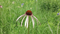 CRP NATIVE SEED MIX | Wisconsin CP25 Mesic Wet Interseed Mix