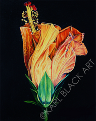 tropical flower art and original floral prints