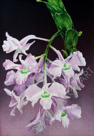 orchid flowers and original floral art and prints