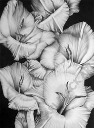 tropical floral art black and white prints