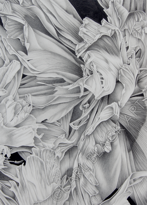original black and white floral art created in graphite pencil by Karl Nathan Black, flowers, tropical