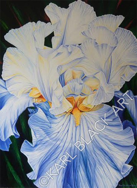 Blue Iris Oil Print Art