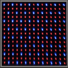 Single LED Panel - Red-Blue