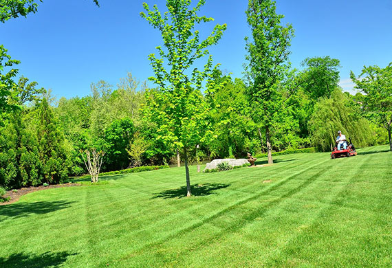 Professional lawn care results help when looking for yards to mow