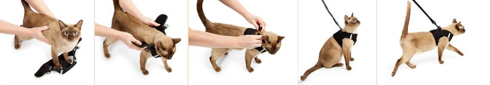 Cat Harness Leash