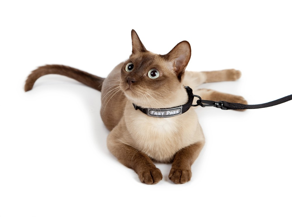 Where To Buy A Long Leash For A Cat