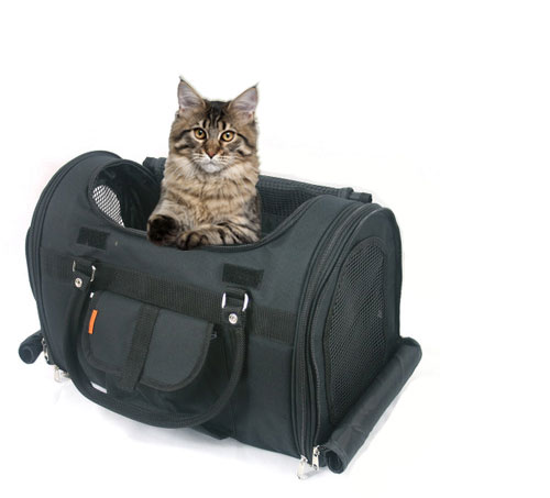 Merveilleux ... Pet Carrier Kitten; Airline Approved For In Cabin ...