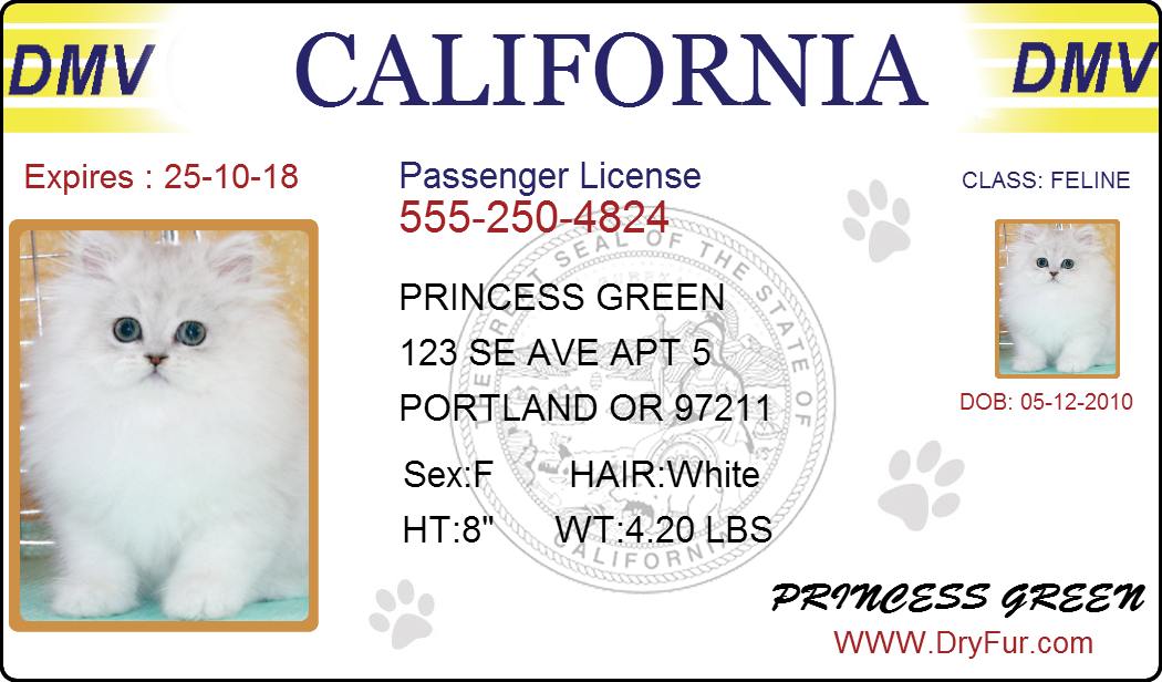 pet-drivers-license2.png