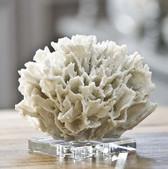 Regina Andrew White Ribbon Coral on Crystal Base