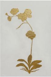 Golden Flora II