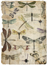 Insect Collection II