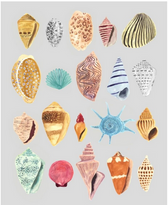 Watercolor Shell Study I