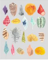 Watercolor Shell Study II