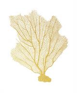 Blush Coral III