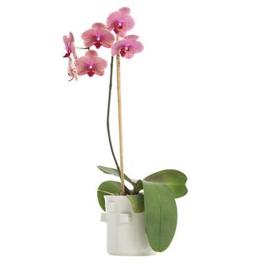 Robertson Short Vase