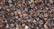 Buckwheat in the Hull Ten (10 KG)