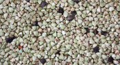 Buckwheat - Whole Twenty (20 KG)