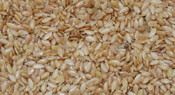 Flax - Golden Ten (10 KG)