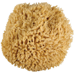 Just Whoa. Ultra Soft & Really Really Big Wool Sea Sponge 6-7""