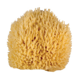 Whoa Daddy! Ultra Soft & Manly Large Wool Sea Sponge 5-6""