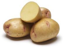 Organic Potato - Yukon Gem