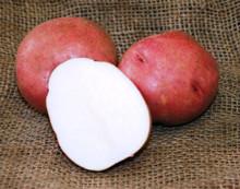 Organic Potato - Red La Soda