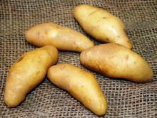 Organic Potato - La Ratte