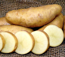 Organic Potato - Russian Banana