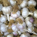Native Creole Garlic - Bulk