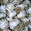 Northern Italian Red Garlic - Bulk Seed