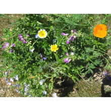 Sonoma County Splendor Mix wildflower seeds