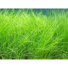 Little 3 Summer Dormant Grass Mix