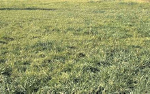 All Grass Horse Pasture Mix