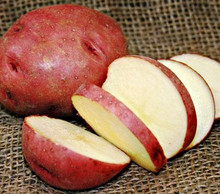 Organic Potato - Dark Red Norland