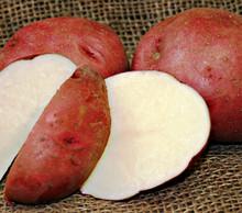 Organic Potato - Cherry Red
