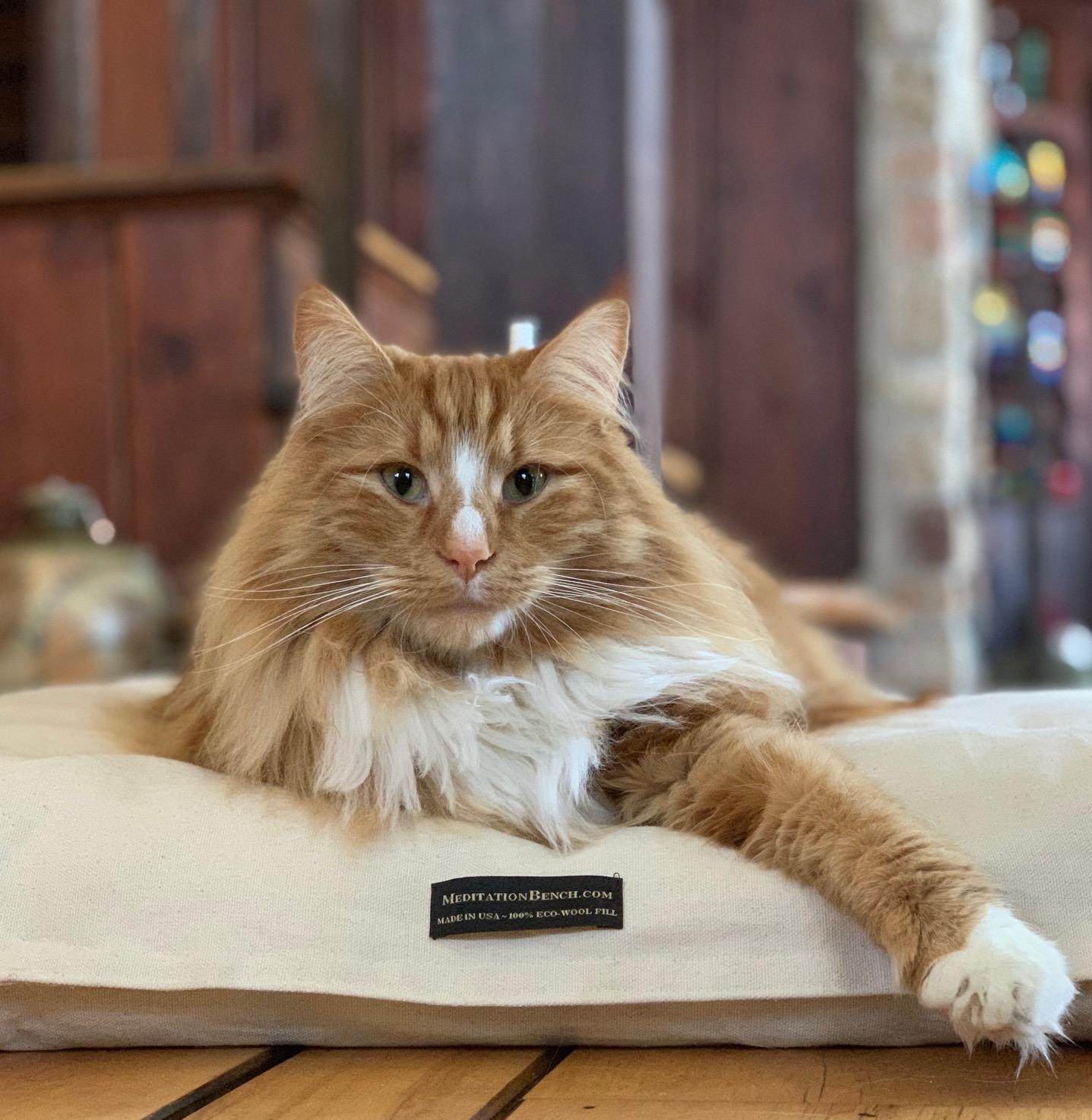 kitty on a zabuton