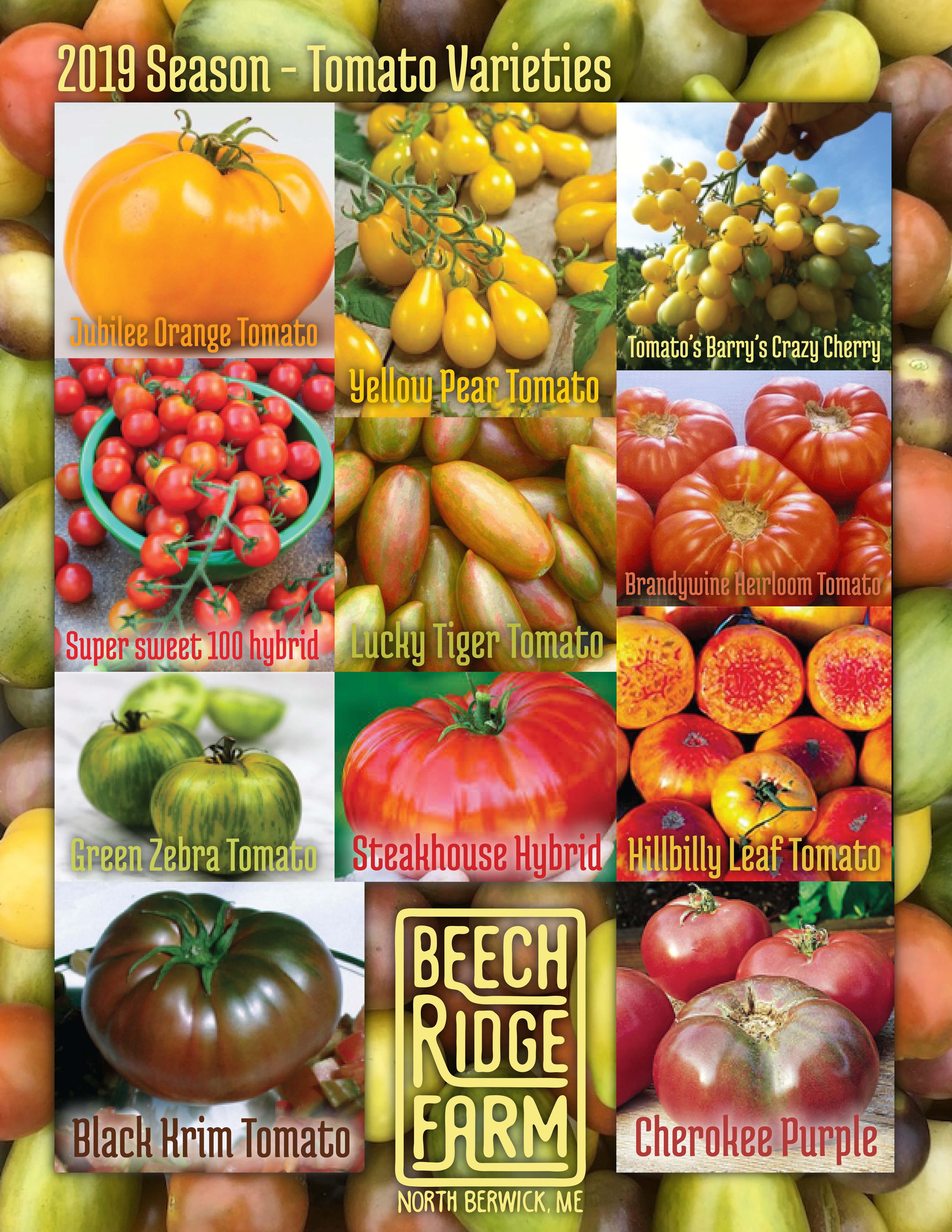 2019-brf-tomato-poster1.jpg