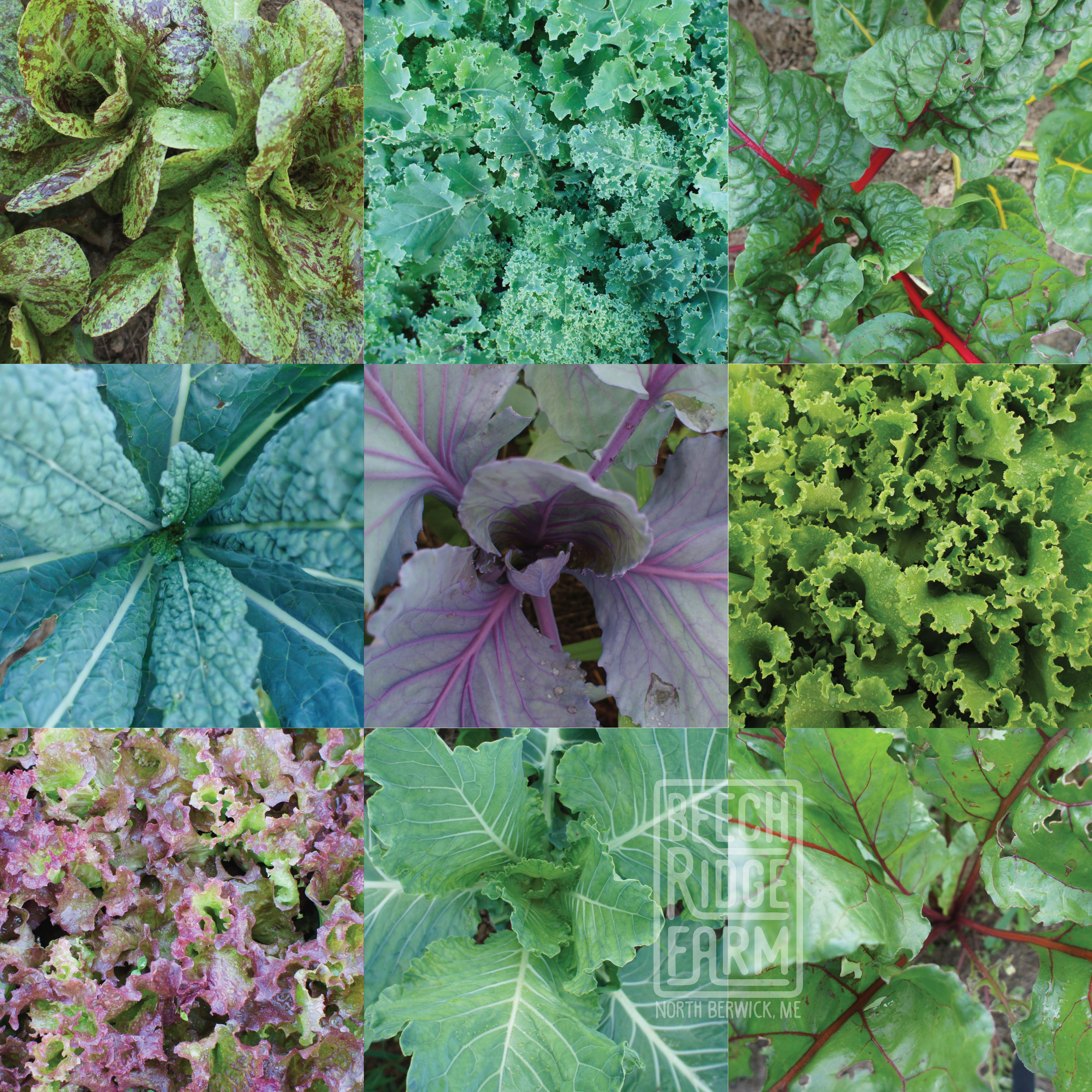 greens-72018-1za.jpg